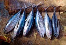 Pesca del tonno nel mar Jonio